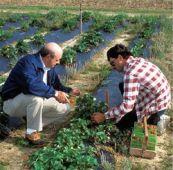 Per il Consiglio di Stato Agrotecnici sempre equipollenti nei concorsi pubblici