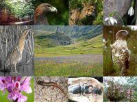 Alla Fiera di Vita in Campagna il primo libro per fare birdwatching e foto da campioni